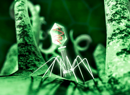 Бактериофаги вошли в клинические рекомендации по лечению острого синусита