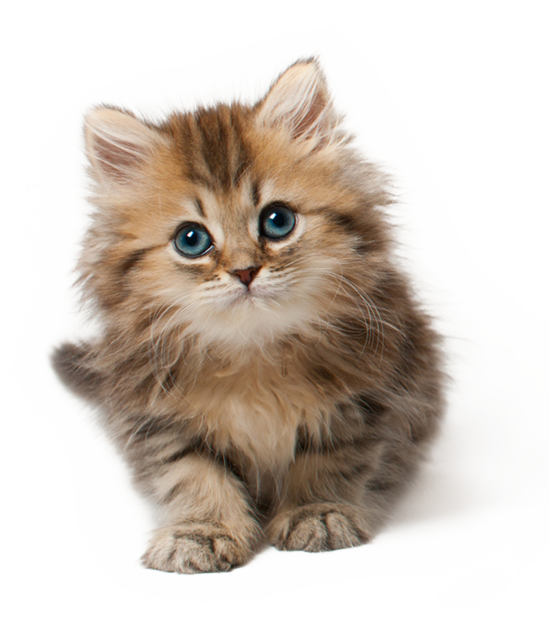 18_kitten_png_by_lg_design-d66s97o